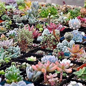Wholesale 100x Mixed Succulents Seeds Rare Cactus Potted Plant Home Garden Decor