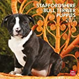Staffordshire Bull Terrier Puppies 2013 Wall by BrownTrout Publishers (2012-08-01)