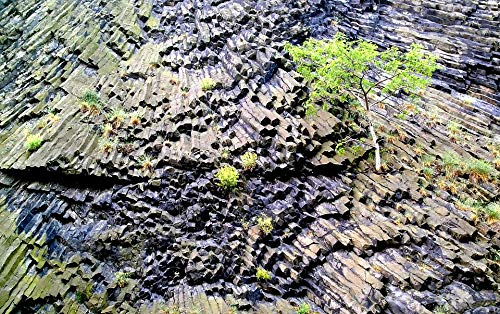 (Home Comforts Peel-n-Stick Poster of Basalt Life Plants Rock Igneous Rock Vivid Imagery Poster 24 x 16 Adhesive Sticker Poster)