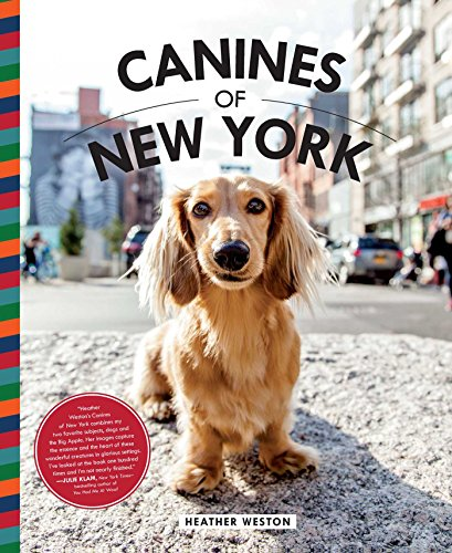 new york dogs - 2