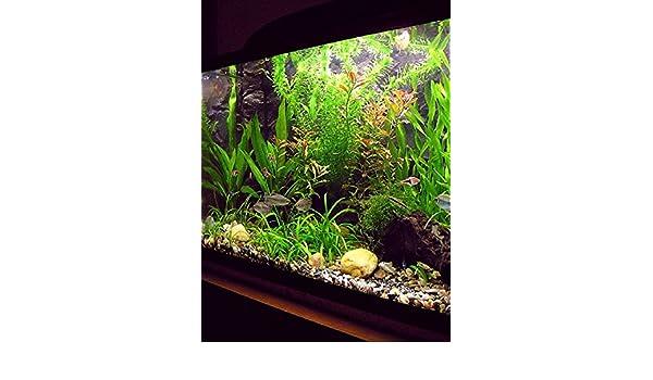 Amazon.com: Acuarios: acuarios de agua dulce: acuarios de agua salada: Una guía para principiantes (Spanish Edition) eBook: Dale Waller: Kindle Store