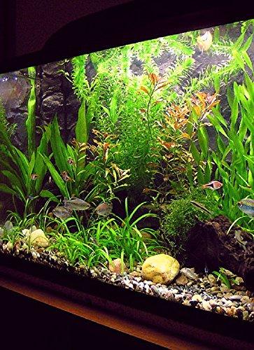 Acuarios: acuarios de agua dulce: acuarios de agua salada: Una guía para principiantes