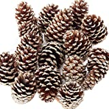 Factory Direct Craft Package of Assorted Size Platinum Glitter Natural Pinecones
