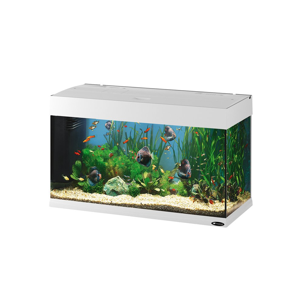 Feplast 65034011 Acuario de Vidrio Dubai 80, Dotado con Filtro, Lámparas y Temporizador, 81 x 36 x 51 Cm - 125 L Blanco: Amazon.es: Productos para mascotas