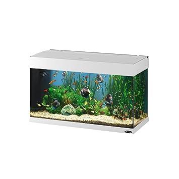 Feplast 65034011 Acuario de Vidrio Dubai 80, Dotado con Filtro ...