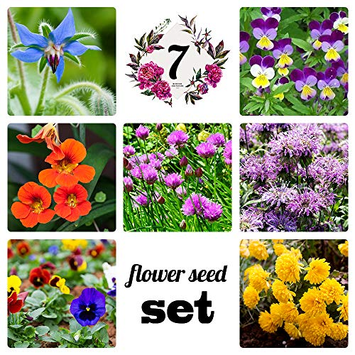 (Collection of 7 Edible Wildflower Seed Packets (7 Individual Packets) Non-GMO Seeds by Seed Needs)