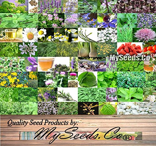 32 x Medicinal & Culinary Herbs Seeds COMBO KIT- from Angelica to Yarrow White Seeds - By MySeeds.Co (32 x Medicinal Herbs Kit) by MySeeds.Co - BIG PACK Seeds