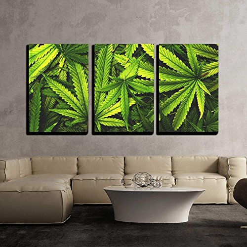 Cannabis Texture Marijuana Leaf Pile Background with Flat Vintage Style x3 Panels