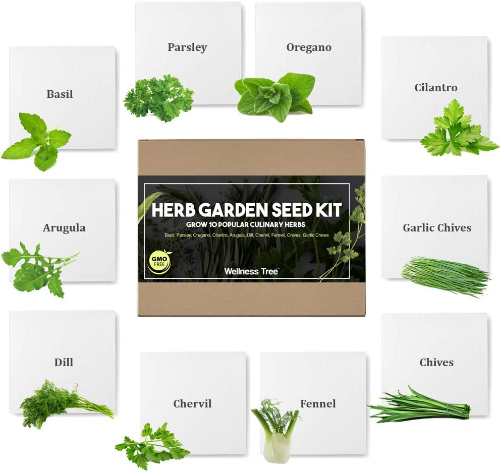 Herb Garden Seeds Kit for Planting | Non GMO | Culinary 10 Herb Seed Packets for Gardening Basil Cilantro Chives Indoor Herb Gardening Starter Seeds Gifts