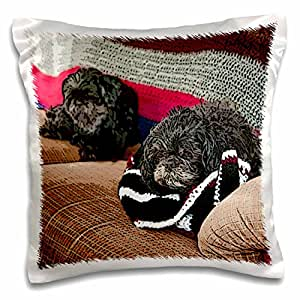 Jos Fauxtographee Realistic - Shiatsu Lhasas Doggie and Shiatsu Pug Dog The Family Pets Just Relaxing on The Tan Couch - 16x16 inch Pillow Case (pc_49439_1)