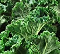Dwarf Siberian Kale Seeds, 500+ Premium Heirloom Seeds, SALE!, (Isla's Garden Seeds), Non Gmo Organic, Survival Seeds, 99.9%Purity, 90% Germination, Highest Quality.