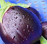 buy Black Beauty Eggplant Seeds- Heirloom- 100+ Seeds now, new 2018-2017 bestseller, review and Photo, best price $2.37