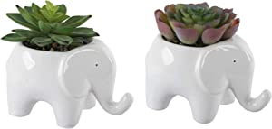"""Flora Bunda Artificial Plants in Cute Animal Novelty Planter Artificial Succulent in Ceramic Elephant Planter, Office, and Home Decoration, 5"""", White Elephant Set of 2, 5.25 x 3.75 x 4.75 inches"""