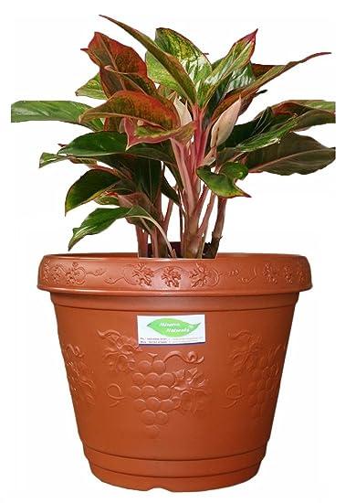 Blossom 12 inch decorative pot Brown color (PACK OF 2) - Minerva Naturals