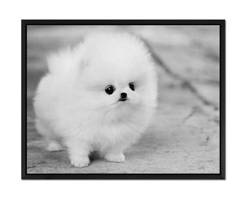 Amazon com: Teacup Pomeranian Puppy Maggie - Art Print Wall Art