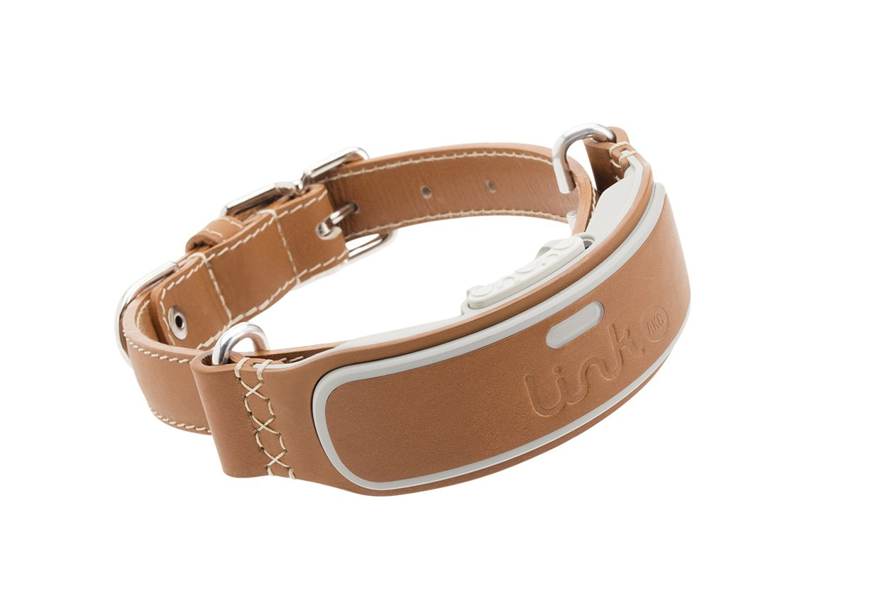 Best Gps Dog Collar Rated Reviewed Keep Track Of Your Pup