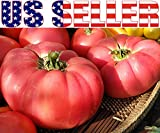 german giant tomato seeds - 50+ ORGANICALLY GROWN GIANT 1-2 LB German Johnson Tomato Seeds, Heirloom NON-GMO, Low Acid, Indeterminate, Open-Pollinated, Productive, Delicious, From USA