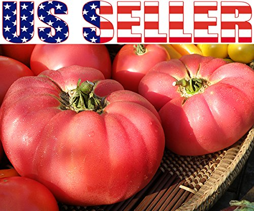 german giant tomato seeds - 1