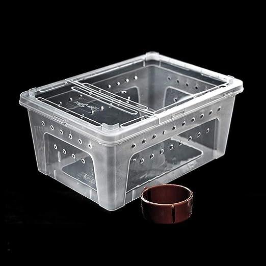 Xu-pet Araña Vivarium Caja Transparente, Alimentación Ornamental ...