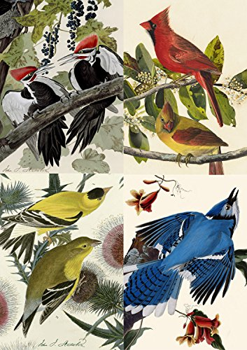 Audubon Octavo Prints - J.J. Audubon