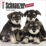 Schnauzer Puppies 2018 7 x 7 Inch Monthly Mini Wall Calendar, Animals Dog Breeds Puppies (Multilingual Edition)