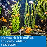 API AMMONIA TEST STRIPS Freshwater and Saltwater
