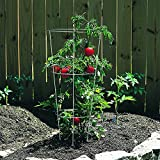 Panacea Products 89723 Tomato and Plant Support