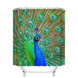 Fangkun Peacock Shower Curtain Decor - Portrait of Peacock with Feathers Out Vibrant Colors Birds Summertime Garden Image Theme - Polyester Fabric Bath Curtains - 12pcs Hooks (YL096#, 72 x 72 inches)