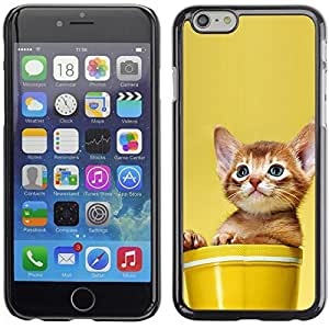 YOYO Slim PC / Aluminium Case Cover Armor Shell Portection //Cute Cat Kitten In A Pot //Apple Iphone 6 Plus 5.5