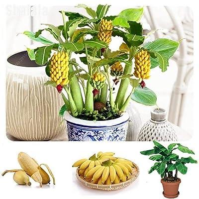 GoodKE Perennial Temperate Fescue Seeds Garden Plant Grass Bonsai Seeds Flowers : Garden & Outdoor