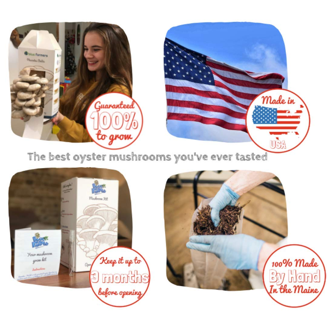 Blue Farmers | Mushrooms | Mushroom Growing Kit | Oyster Mushrooms Grow Kit | Grey Oyster Mushrooms | Grows in 10 Days | Top Gardening Gift | Original Gift | Mothers Day Gifts (Mystery Kit) by Blue Farmers (Image #5)