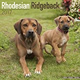 Rhodesian Ridgeback Calendar 2017 - Dog Breed Calendars - 2016 - 2017 wall calendars - 16 Month by Avonside