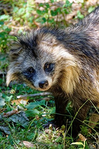 Asian Raccoon Dog Looking at You Wild Canid Journal: 150 Page Lined Notebook/Diary pdf epub