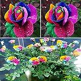BigFamily New Beautiful 500Pcs Colorful Rainbow Rose Flower Seeds Yard Garden Decor