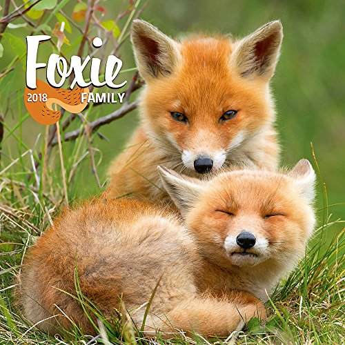 2018 Fox Calendar - Foxie Wall Calendar