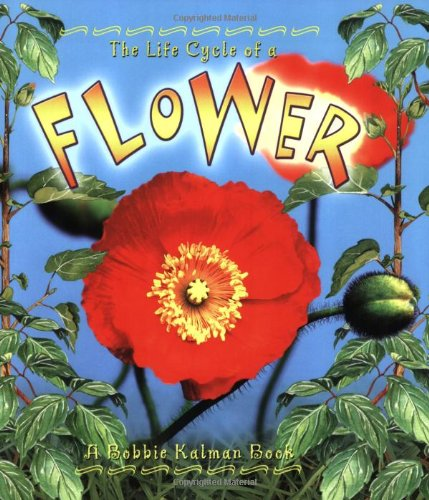 Flower (Life Cycle of A...(Paperback))