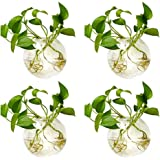 4 Pcs Wall Hanging Glass Planters 4 Inches Diameter Round Glass Plant Pot - Water Planting Vases Air Flower Vase Plant Terrar