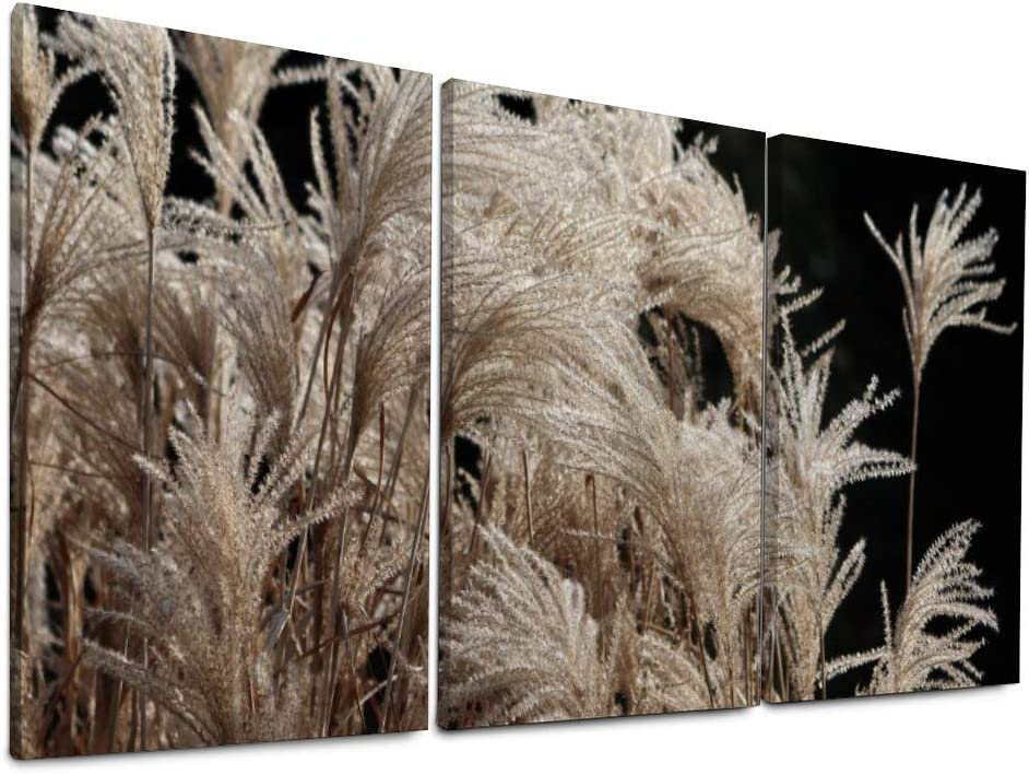 NOAON Ready to Hang 16x32 Inch x3 Pcs Canvas Prints for Home Decor Reed Miscanthus Elephant Grass Tufts Trockenblume Wall Art Living Wood Framed