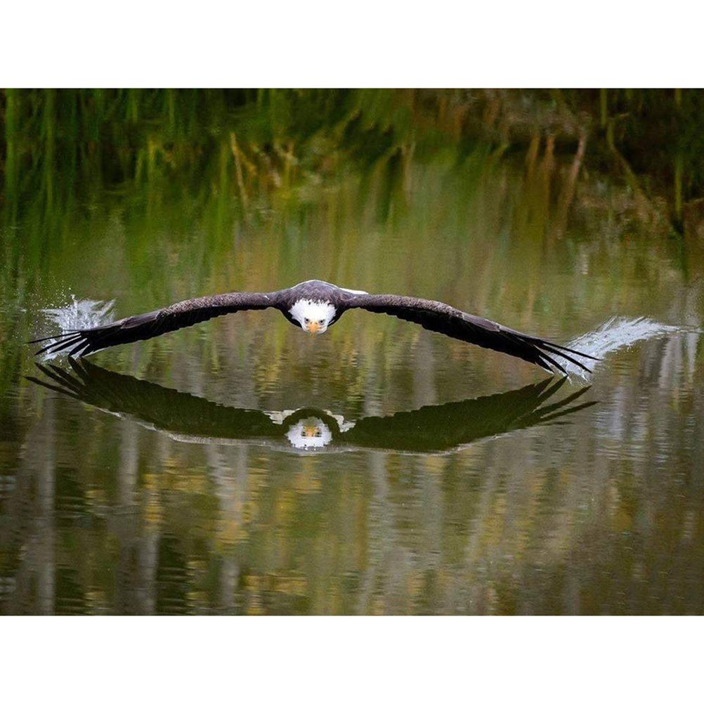 ViewHuge 5D ダイヤモンドDIY絵画 数字キット 樹脂フルスクエアドリル刺繍絵画 絵画アートクラフトキット ホームウォールデコイーグル 30x20cm DW-ZU20944 B07H1GFTTP Dw #01 30x20cm