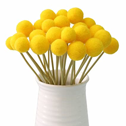 Amazon jarown 20 pcs artificial dried craspedia flowers yellow jarown 20 pcs artificial dried craspedia flowers yellow billy balls dried plants for wedding bouquet home mightylinksfo