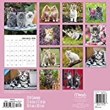 2018 Kittens Wall Calendar (Mead)