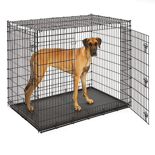 MidWest Homes for Pets XXL Giant Dog Crate | 54-Inch Long Ginormous Double Door Dog Crate Ideal for a Great Dane, Mastiff, St. Bernard & Other XXL Dog Breeds (Midwest Icrate Double Door Folding Dog Crate)