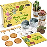 Deluxe Succulent & Cactus Seed Grow Kit - Complete