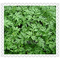 Green : New Home Garden Plant 100 Seeds Artemisia Annua Seeds - One-Year Mugwort