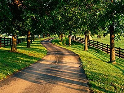 Tree Lined Drive On Horse Farm Kentucky -Oil Painting On Canvas Modern Wall Art Pictures For Home Decoration Wooden Framed (20X16 Inch, Framed)