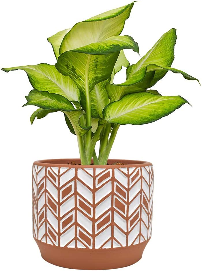 Blomelf Cement Planter Pot Indoor - 5.3 Inch Medium Flower Plant Pots with Drainage Hole Elegant Cylinder Bonsai Garden Clay Containers Unglazed Potting Decorative Patio, Brown