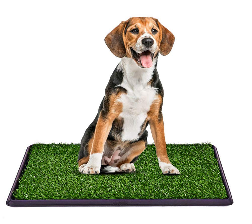 Dog toilet Plastic Potty,Premium Pet Dog Potty Pee Turf Grass, Synthetic Grass,Portable, Easy to Clean, Non-Toxic, Perfect for Indoor & Outdoor