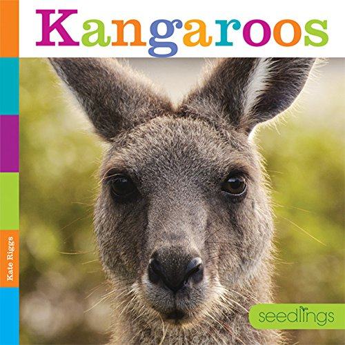 Kangaroos (Seedlings)
