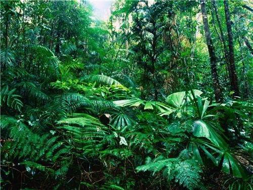 Amazon Com Amazon Rainforest Glossy Poster Picture Photo Rain