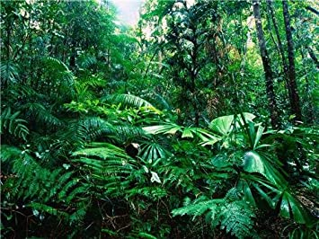 why is the amazon rainforest important